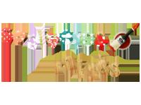 Medinių raidžių gamintojai - Spalvotos raidės